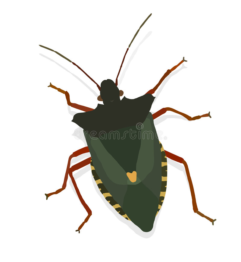 Download Vector bug stock vector. Image of antennas, crawl, illustration - 1320021