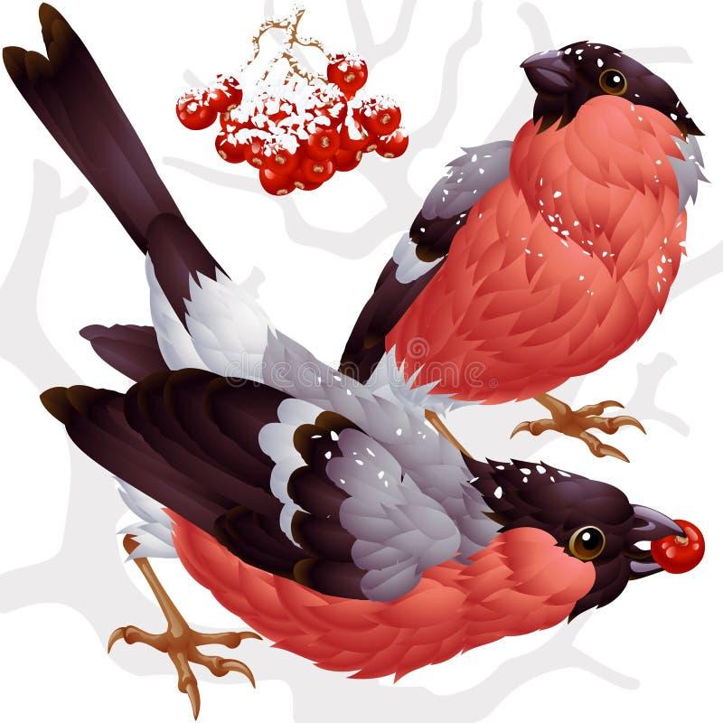 Vector bullfinch and ashberry vector illustration