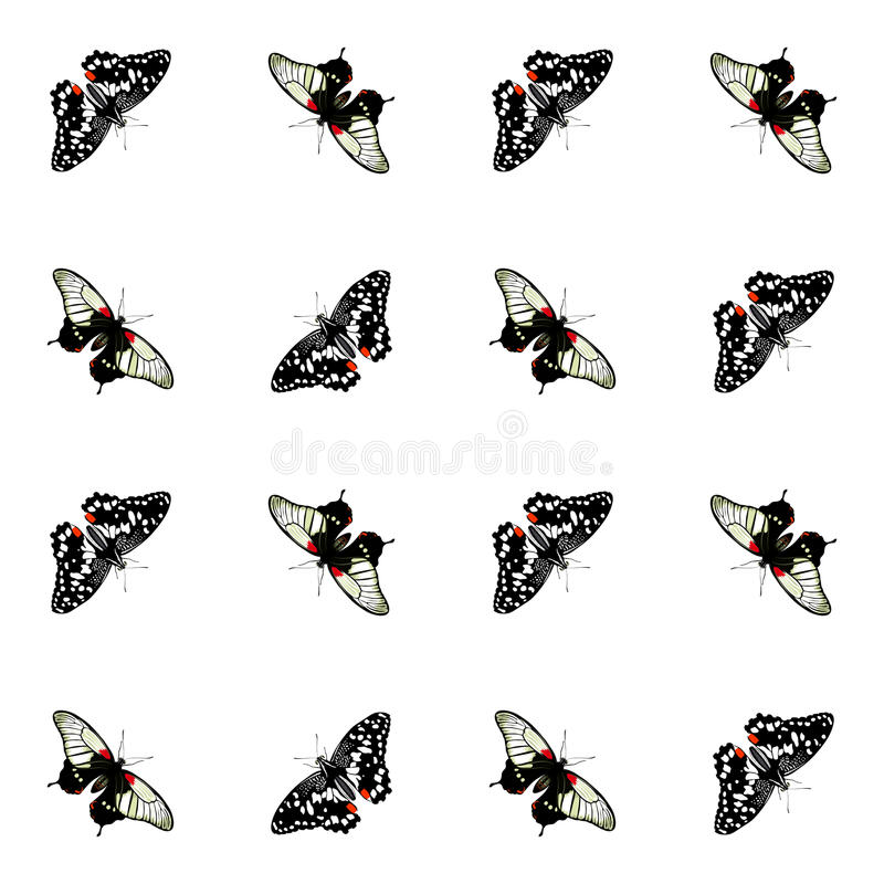 Vector butterflies. Color butterflies. vector seamless pattern vector illustration