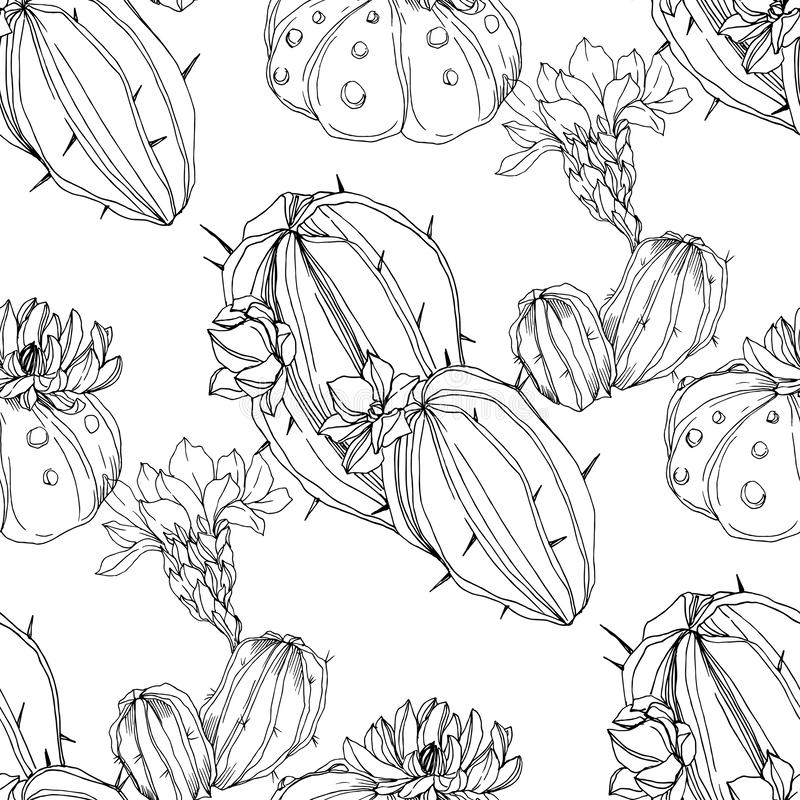 Vector Cacti flower. Black and white engraved ink art. Seamless background pattern. Fabric wallpaper print texture. royalty free illustration