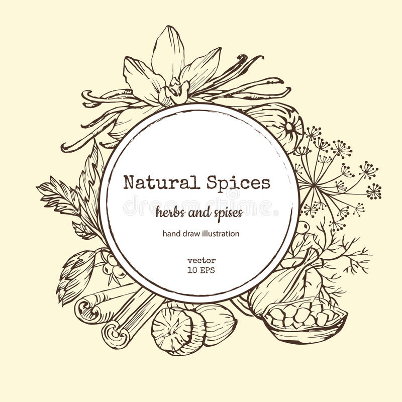 Vector card design with hand drawn spices and herbs. Decorative colorful background with vintage spice sketch. royalty free illustration