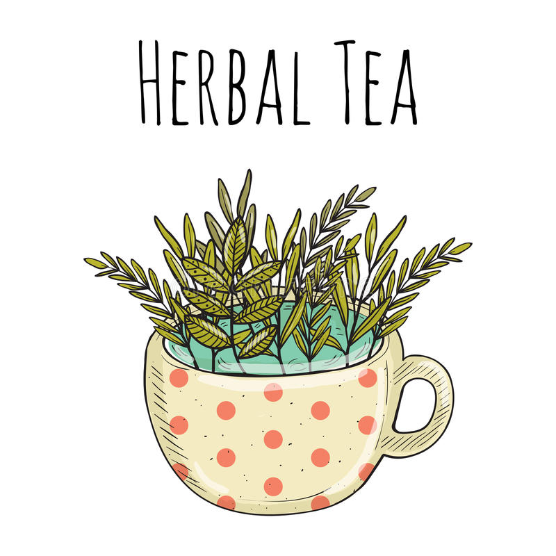 Vector card design with hand drawn tea illustration. Decorative inking background with vintage tea. Natural herbal tea for summer mood royalty free illustration
