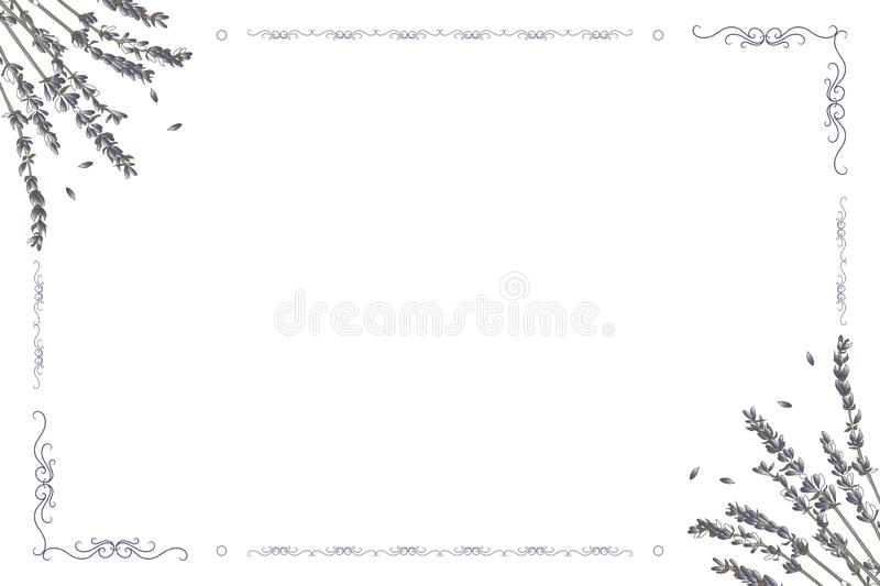 Vector card frame with lavender flowers on a white background royalty free illustration