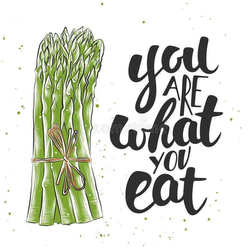 Vector card with hand drawn unique typography design element for greeting cards, decoration, prints and posters. You are what you eat with sketch of asparagus royalty free illustration