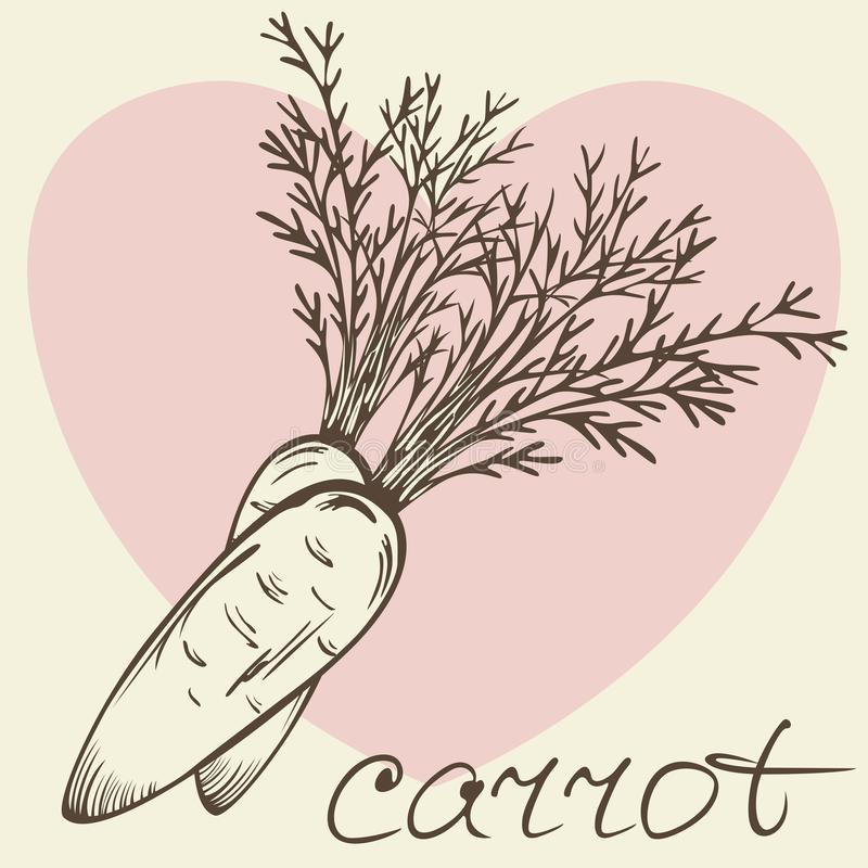 Vector of carrot stock photo
