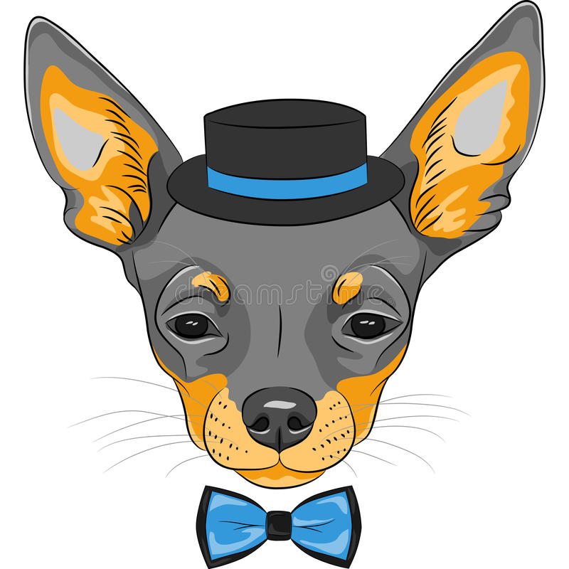Vector cartoon hipster dog Chihuahua breed. Color sketch of the cartoon hipster cute dog Chihuahua breed in hat and bow tie royalty free illustration