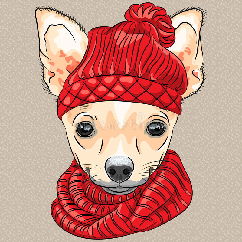 Vector cartoon hipster dog Chihuahua breed smiling. Color sketch of the cartoon hipster cute dog Chihuahua breed in knitted hat and scarf stock illustration