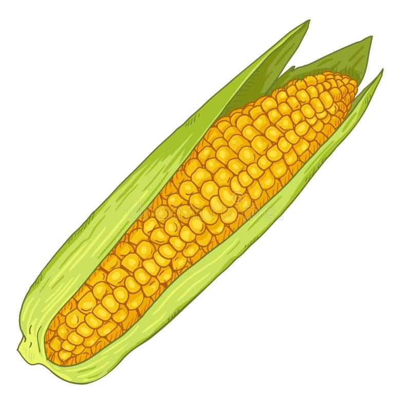 Vector Cartoon Yellow Corn Cob stock illustration