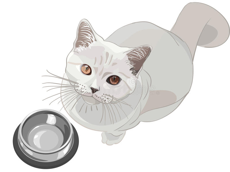 Vector Cat asks to eat stock photography