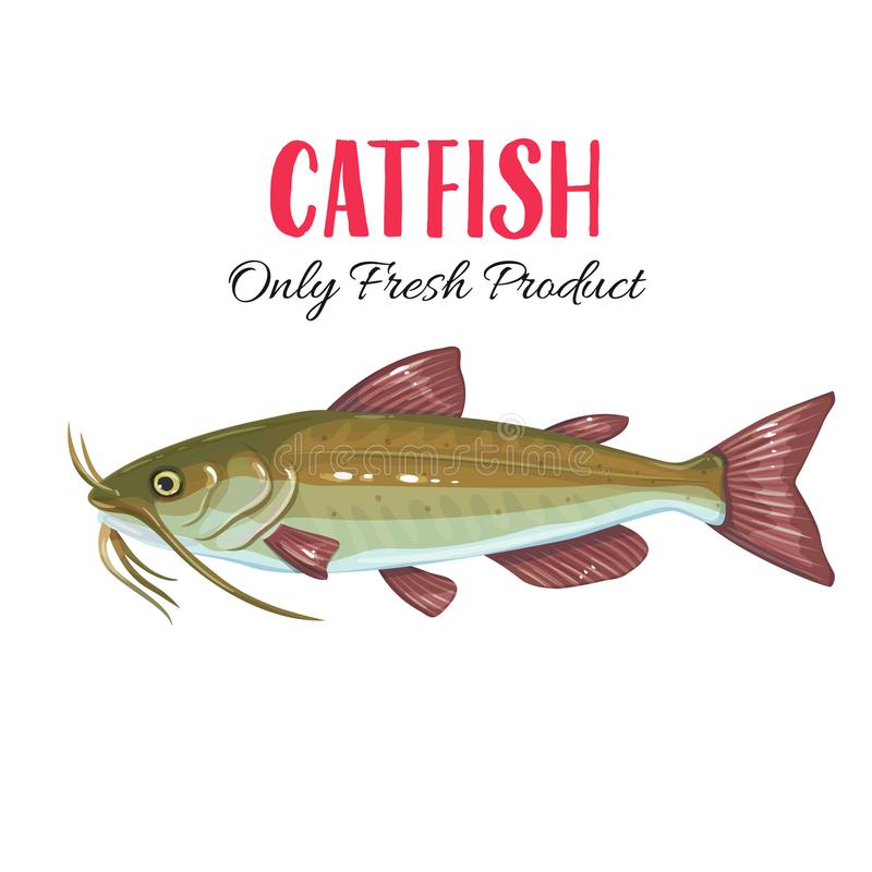 Free Vector Catfish. Stock Image - 117227701