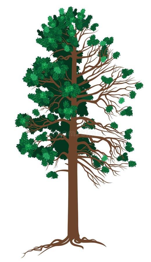 Download Vector Cedar stock vector. Illustration of green, lawn - 28742918