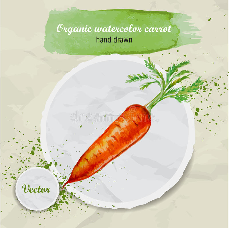 Vector a cenoura tirada mão da aquarela com folhas e as gotas da aquarela na parte de papel redonda ilustração stock