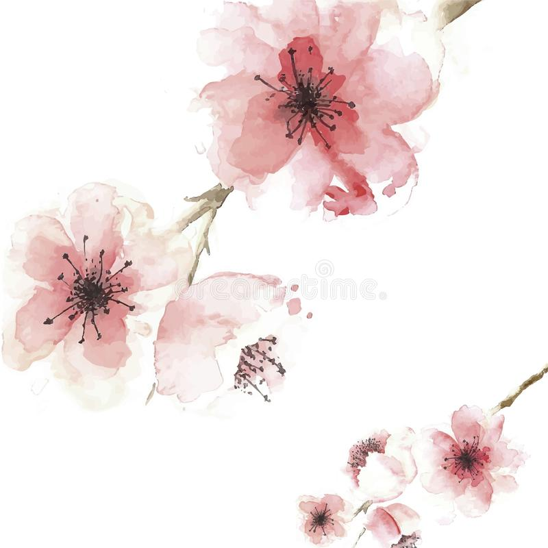 Cherry blossom background in watercolor style Design vector illustration