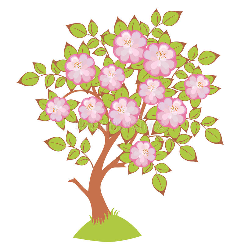 vector Cherry blossoms royalty free illustration