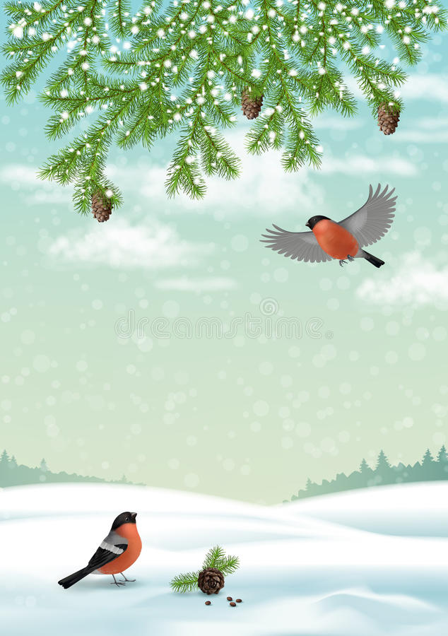 Vector Christmas Winter Landscape. With fir branches, birds bullfinches, cones royalty free illustration