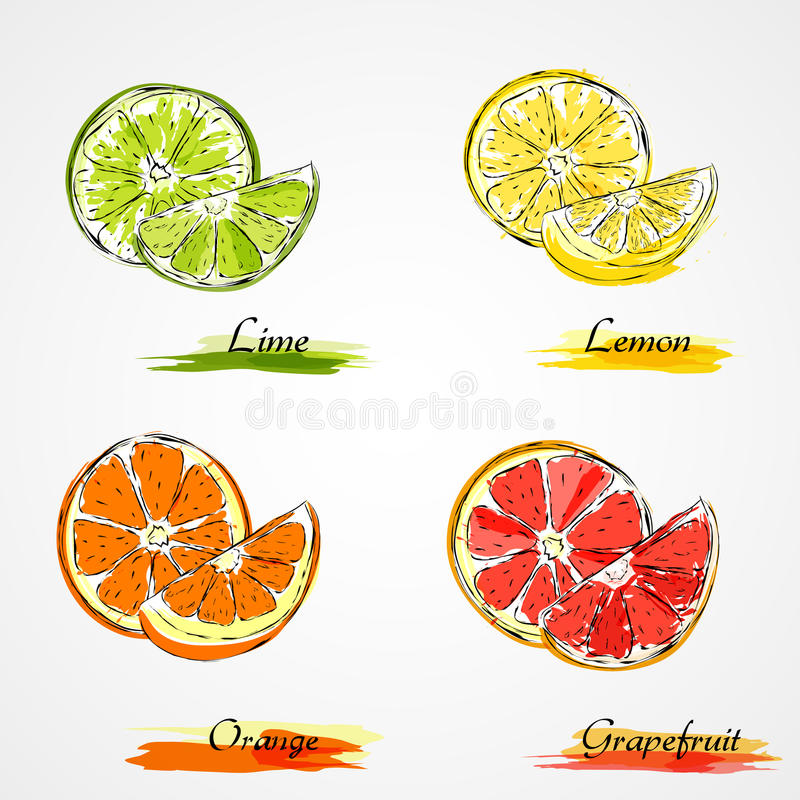 Vector citrus fruits. Set of hand drawn vector slice and piece of citrus, lemon, orange, lime an grapefruit fruits on light background royalty free illustration