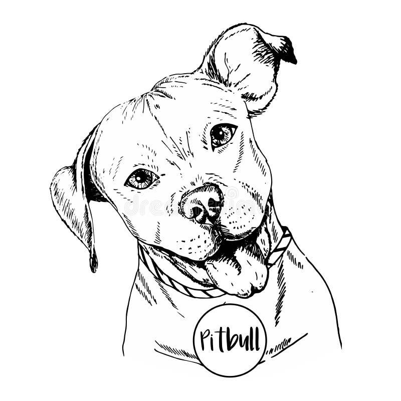 Vector close up portrait of english pitbull. Hand drawn domestic pet dog illustration. Isolated on white background. stock illustration