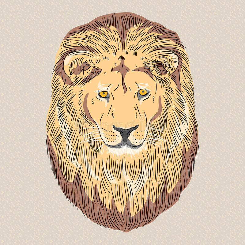 Vector closeup portrait of a serious lion royalty free stock photo