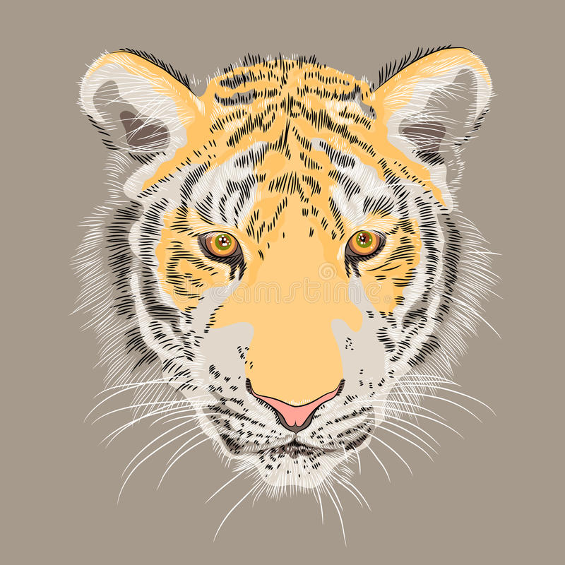 Vector closeup portrait of a serious tiger royalty free stock photo