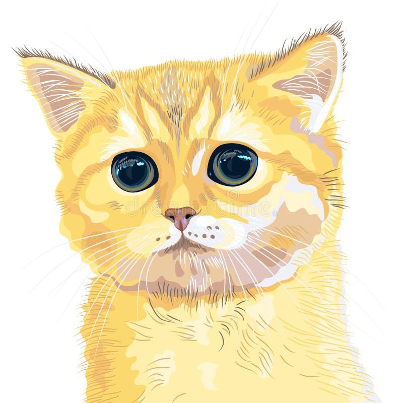Vector closeup sketch cute lilac British kitten stock photography