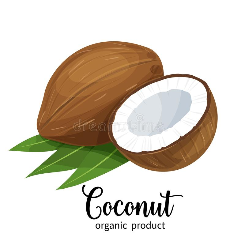 Coconut in cartoon style. Vector coconut in cartoon style for brochures, banner and label cosmetic product for hair and body care royalty free illustration
