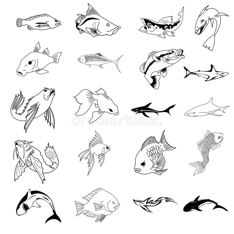 Download Vector Collection Of 30 Fish Types Stock Vector - Illustration of cartoon, trout: 13201900