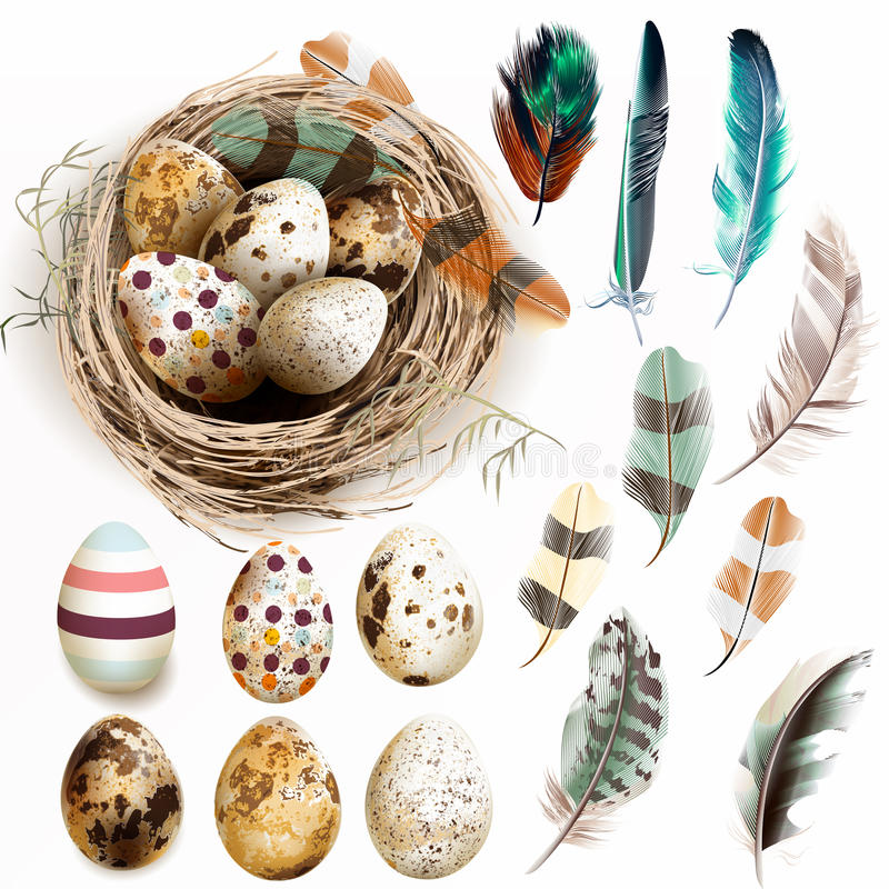 Vector collection with Easter eggs bird nest feathers in vintage vector illustration