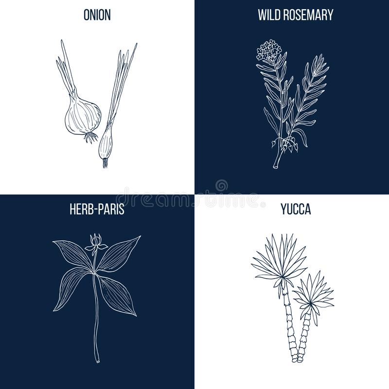 Set of four hand drawn eatable and medicinal plants stock illustration
