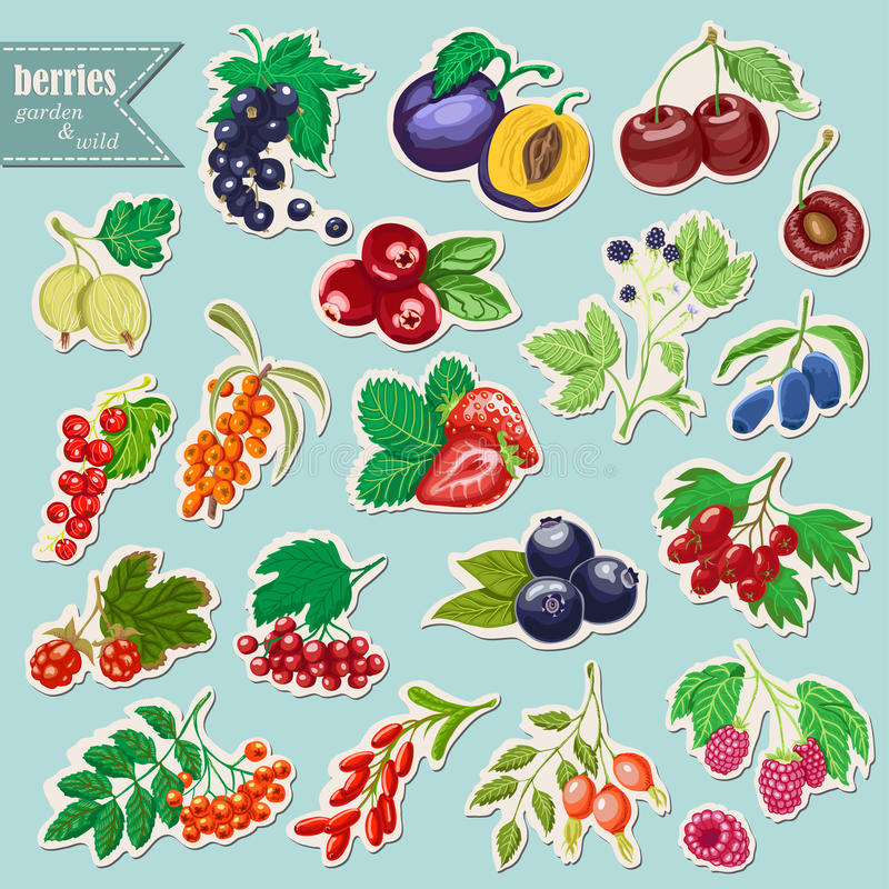 Vector collection of isolated garden and wild berries. Sticker elements. Vector illustration for your design vector illustration