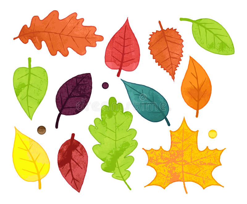 Vector Collection of Watercolor Style Autumn Leaves stock illustration