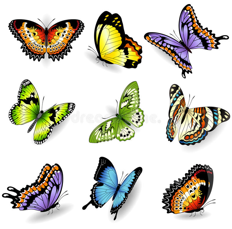 Vector color butterfly illustrations vector illustration