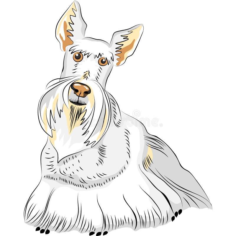 Vector Color Sketch Dog Breed Scottish Terrier. Dog breed Scottish Terrier wheat colored on the white background vector illustration