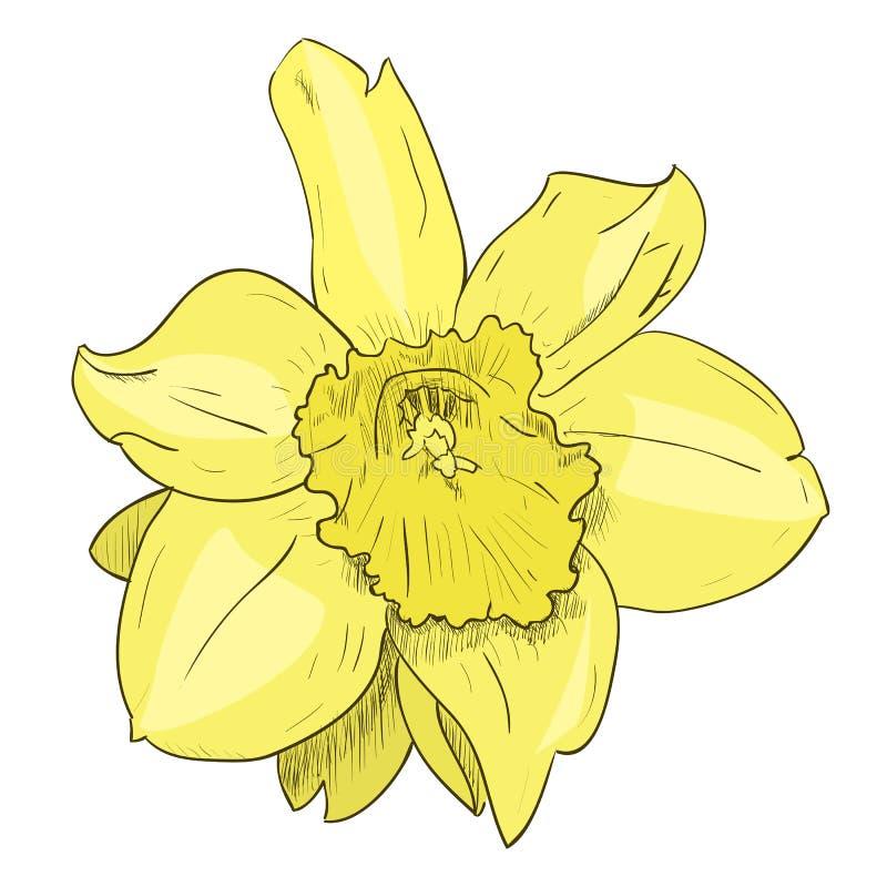 Vector color sketch of yellow flower stock vector illustration of download vector color sketch of yellow flower stock vector illustration of drawing icon mightylinksfo