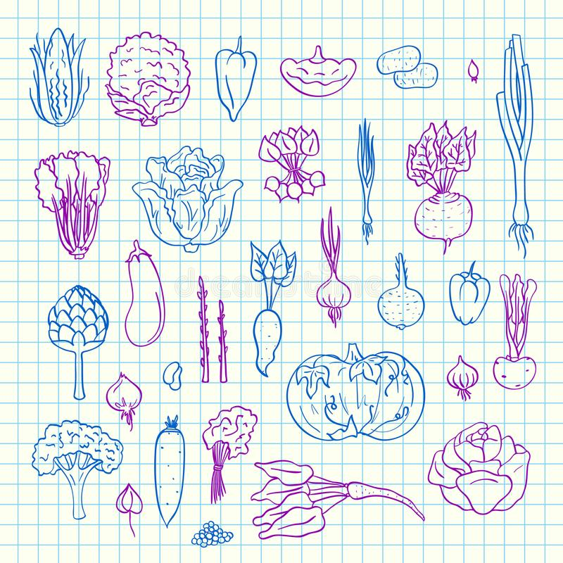 Vector colored hand drawn doodle vegetables icons set on blue cell sheet illustration. greenery elements on vector illustration