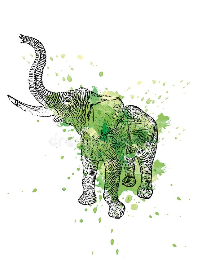 Vector colored illustration of a standing African elephant with watercolor splashes in the background stock photo