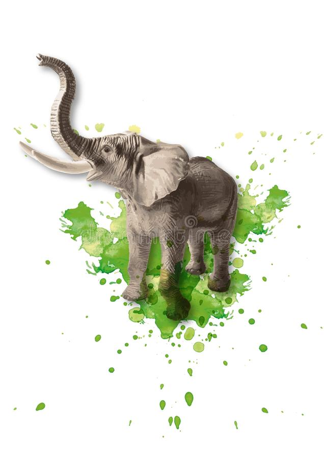 Vector colored illustration of a standing African elephant with watercolor splashes in the background royalty free stock images