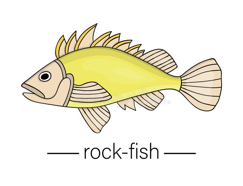Vector colored rock-fish. Cartoon style sea fish icon royalty free illustration