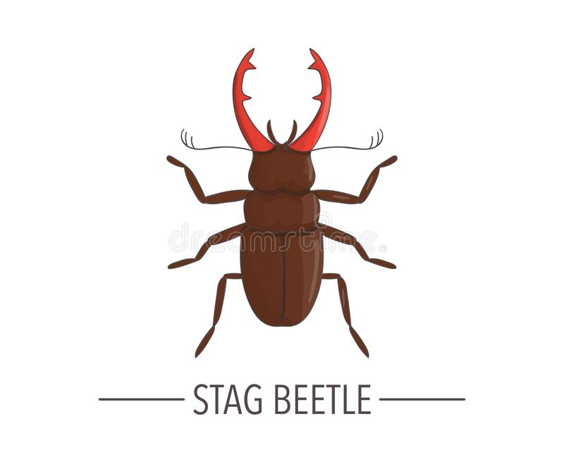 Vector colored stag beetle icon isolated on white background stock illustration