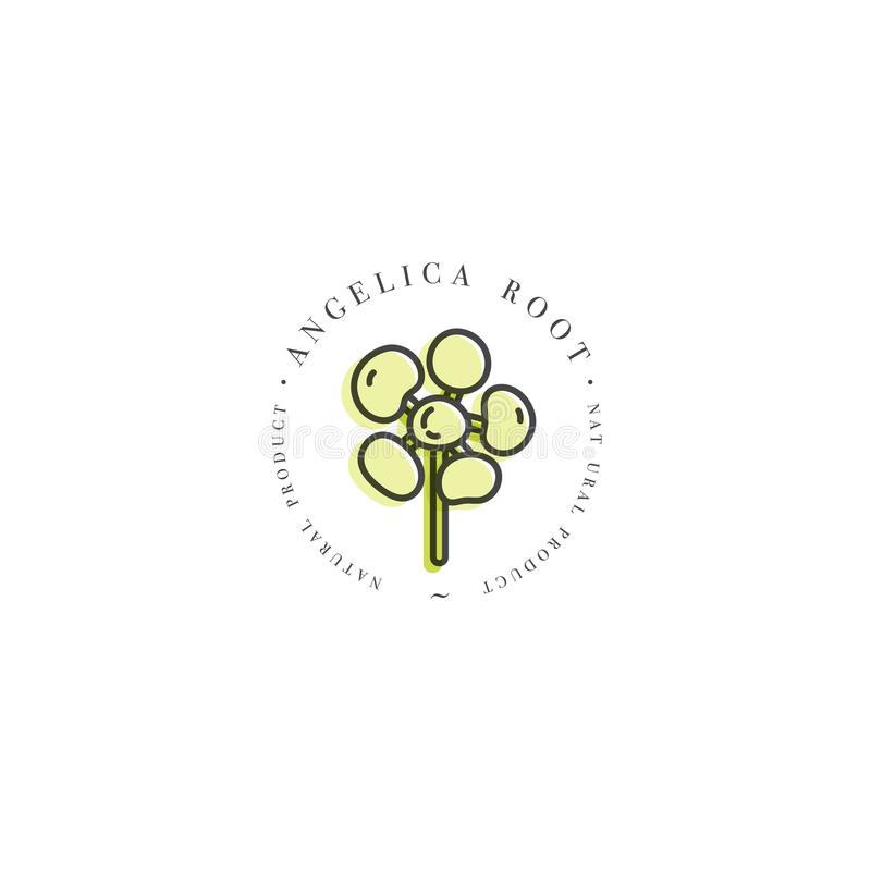 Vector colorful design template logo and emblem healthy herb- angelica root. Logo in trendy linear style isolated on vector illustration