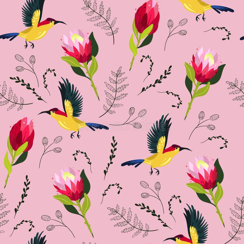Vector colorful seamless pattern with protea flowers and colibri birds royalty free illustration