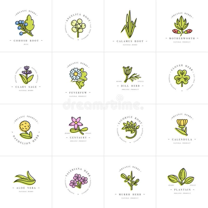 Vector colorful set design templates and emblems - healthy herbs and spices. Different medicinal, cosmetic plants. Logos vector illustration