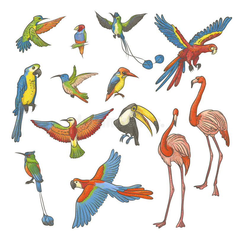 Vector colorful textured sketch set drawn by hand on a white background. Collection of bright exotic tropical birds. Isolated outl stock illustration