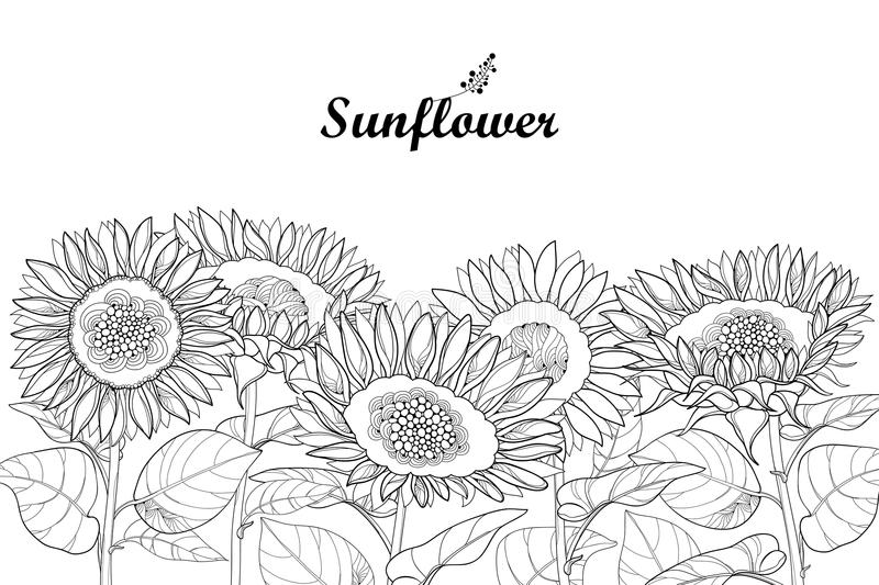 Vector composition with outline open Sunflower or Helianthus flower and leaves isolated on white background. Floral border. royalty free illustration