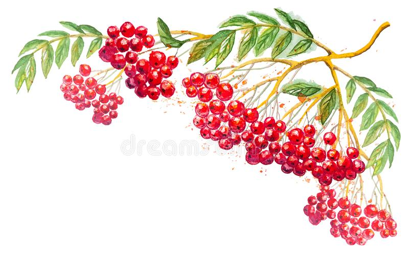 Vector composition with rowanberry branch royalty free illustration