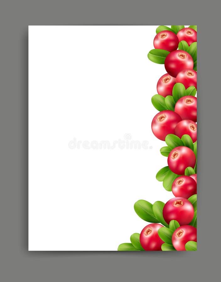 Vector con los arándanos realistas aislados en un bei ilustración del vector
