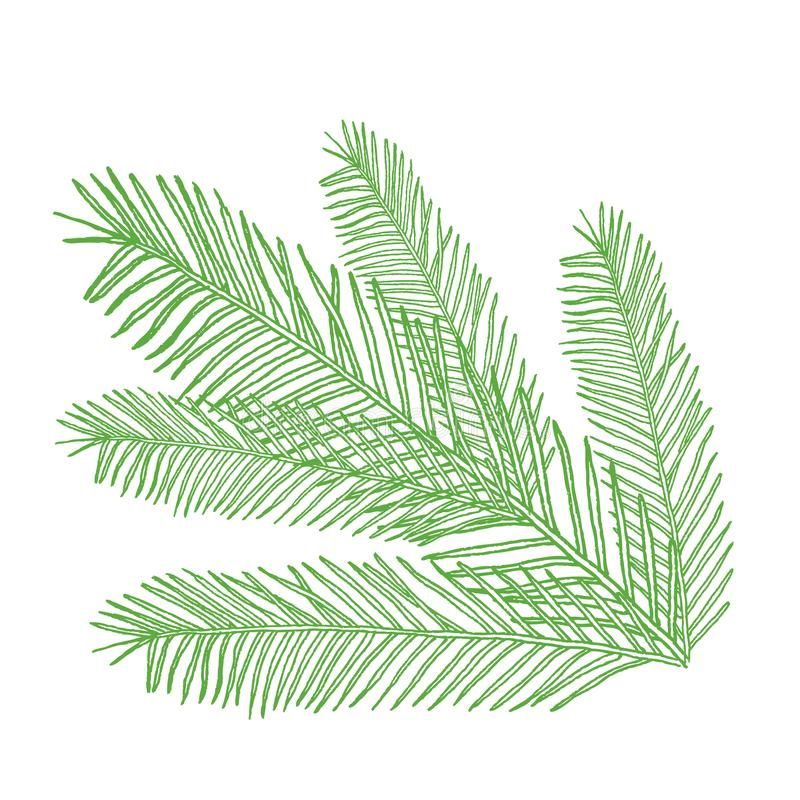 Vector conifers illustration on white. Evergreen plant sketch. Christmas decoration elements vector illustration