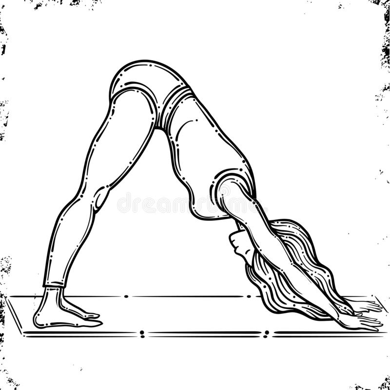 Vector contour of woman in the yoga pose, downward dog pose. Adho Mukha Svanasana pose. Vector. Isolated on white background. Vector contour of woman in the yoga royalty free illustration