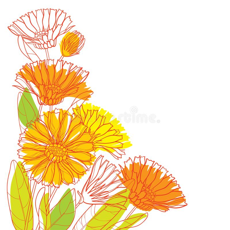 Vector corner bouquet with outline Calendula officinalis or pot marigold, bud, green leaf and orange flower isolated on white. vector illustration