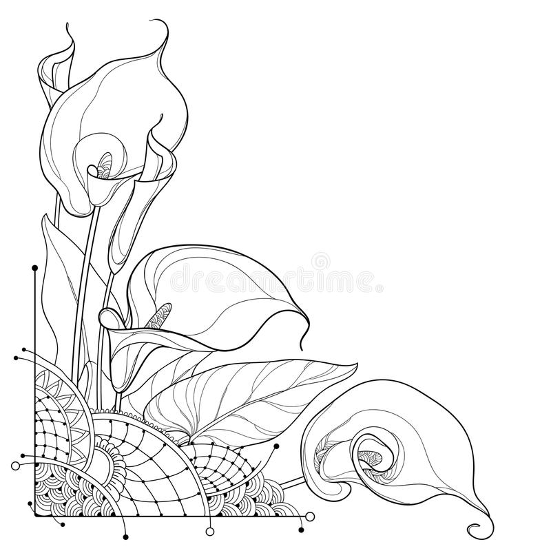 Vector corner bouquet of outline Calla lily flower or Zantedeschia, bud and ornate leaf in black isolated on white background. stock illustration