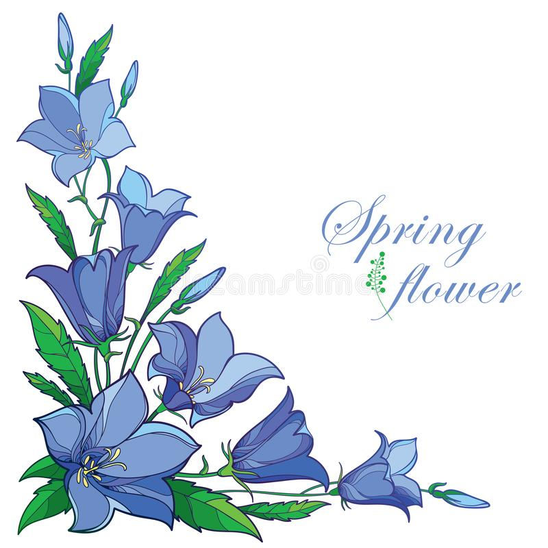 Vector corner bouquet with outline Campanula or Bellflower or Bluebell flower in pastel blue, leaf and bud isolated on white. Vector corner bouquet with outline stock illustration